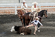 Luis Alfonso Franco, Jr. tries to get a steer to stand after team roping as his father an uncle look on at the family Charreria practice session in the Jalisco Highlands town of Capilla de Guadalupe, Mexico. The Franco family has dominated Mexican rodeo for 40-years and has won three national championships, five second places and five third places.