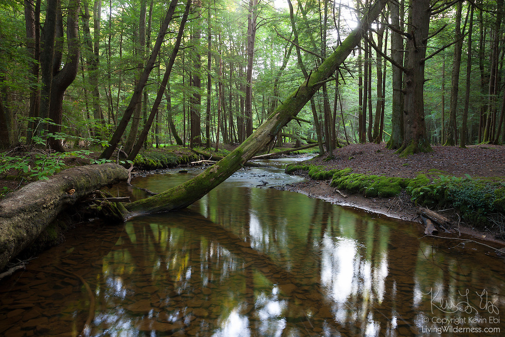 Fallen trees stretch across East Hickory Creek near the southern boundary of the Hickory Creek Wilderness in the Allegheny National Forest, Warren County, Pennsylvania.