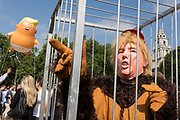 The inflatable balloon called Baby Trump flies above a caged protestor Parliament Square in Westminster, the seat of the UK Parliament, during the US Presidents visit to the UK, on 13th July 2018, in London, England. Baby Trump is a 20ft high orange blimp depicting the US President as an enraged, smartphone-clutching infant - and given special permission to appear above the capital by London Mayor Sadiq Khan because of its protest rather than artistic nature. It is the brainchild of Graphic designer Matt Bonner.