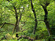 The woodland and mossy rocks at Padley Gorge, Longshaw Estate within the Peak District National Park on 3 July 2017 in Derbyshire, United Kingdom