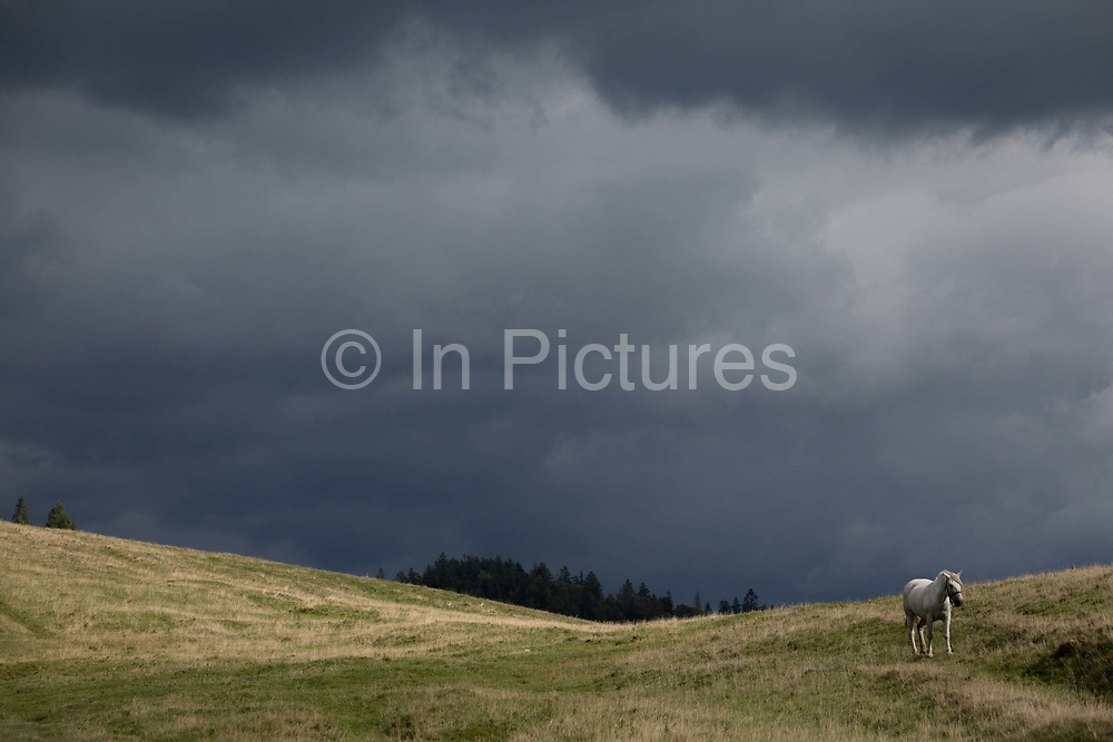 With stormy clouds gathering in the distance, a white horse walks downhill towards a traditional Polish shepherds mountain hut, on 20th September 2019, Biala Woda, Jaworki, near Szczawnica, Malopolska, Poland.