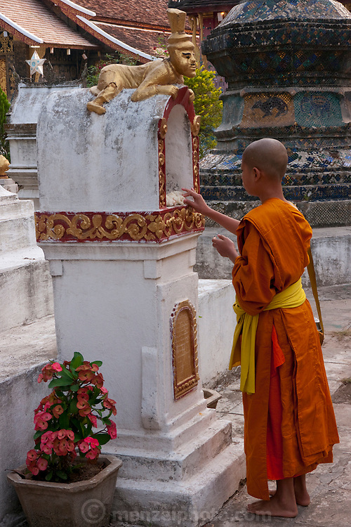 Luang Prabang, Laos. Wat Xieng Thong Buddhist temple complex. A young novice monk leaves some sticky rice from his morning's alms collection on a small stupa.