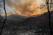 12092017 Ojai, California, USA:  A trail of devastation is left behind by the Thomas Fire in the forest along California Route 33 outside of Ojai in the Los Padres National Forest. The fire has burned over 140,000 acres and is only 15 percent contained. Firefighters expect to be fighting the wild fire until at least Christmas. (Photo by Jeremy Hogan) ©2017 All rights reserved