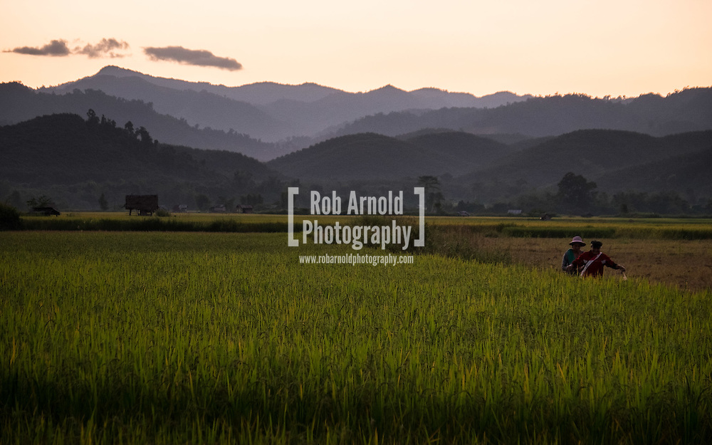 People walking home from a day working in the rice fields during sunset in Luang Nam Tha, Laos