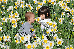 © Licensed to London News Pictures. 24/03/2014<br /> Josepine (age 4) with her brother Tao (age 1) smelling the daffodils in Greenwich Park.<br /> Sunny Weather today (24/03/2014) in London as people enjoy Greenwich Park, Greenwich, London.<br /> Photo credit :Grant Falvey/LNP