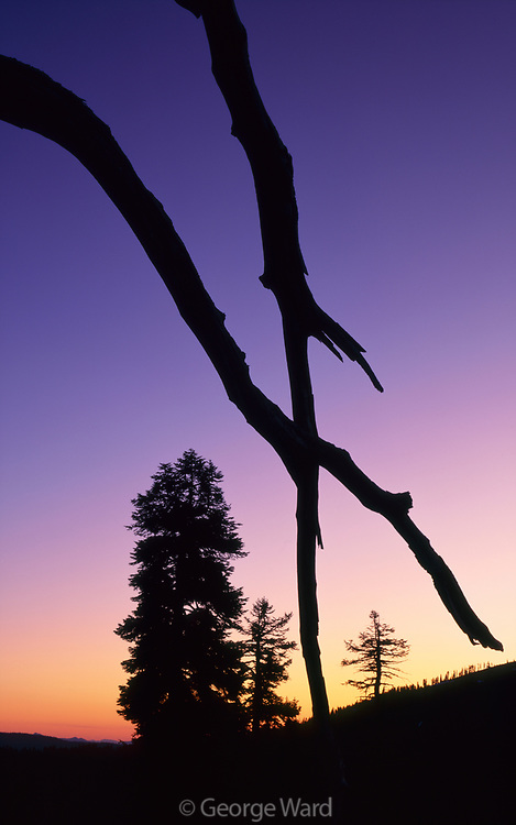 Silhouette on Soldier Ridge, Yolla Bolly–Middle Eel Wilderness, Mendocino National Forest, California
