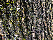 Tree bark in the day time backround