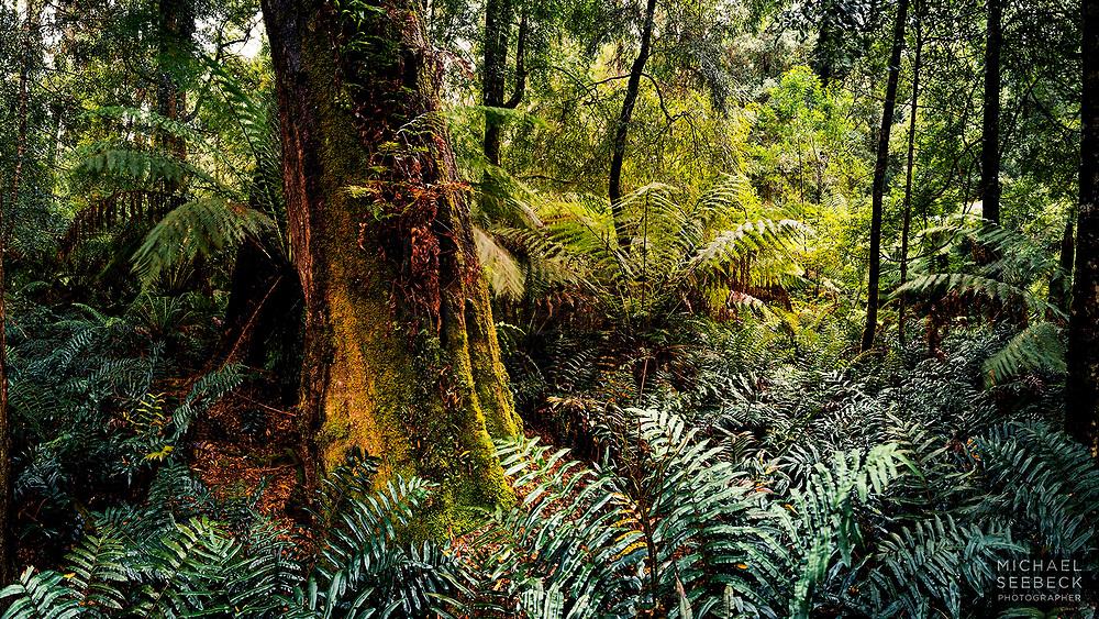 Coastal temperate rainforest in Western Tasmania.<br /> <br /> Code: WADW0001<br /> <br /> Open Edition Print