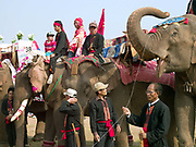 Mahouts and their elephants at a baci ceremony at the Sayaboury elephant festival, Sayaboury province, Lao PDR. The baci is a long series of chanted blessings and exhortations to welcome back any 'kwans' or body spirits that might have been lost. In traditional Lao culture it is believed that elephants, like humans, have 32 kwan (or souls), vital for health and spiritual wellbeing.<br /> <br /> Originally created by ElefantAsia in 2007, the 3-day elephant festival takes place in February in the province of Sayaboury with over 80,000 local and international people coming together to experience the grand procession of decorated elephants. It is now organised by the provincial government of Sayaboury.The Elephant Festival is designed to draw the public's attention to the condition of the endangered elephant, whilst acknowledging and celebrating the ancestral tradition of elephant domestication and the way of life chosen by the mahout. Laos was once known as the land of a million elephants but now there are fewer than 900 living in the country. Around 470 of them are in captivity, traditionally employed by a lucrative logging industry. Elephats are trained and worked by a mahout (handler) whose relationship to the animal is often described as a marriage and can last a lifetime. But captive elephants are often overworked and exhausted and as a consequence no longer breed. With only two elephants born for every ten that die, the Asian elephant, the sacred national emblem of Laos, is under serious threat of extinction.