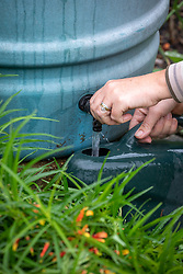 Filling a watering can from a tap on a water butt.