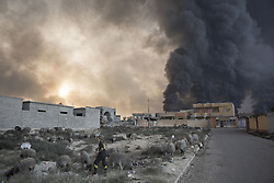 October 21, 2016 - Qayyarah, Iraqi-Kurdistan, Iraq - A young shepherd tends to his herd beneath a cloud of smoke rising from burning oil wells. The wells were set alight in July by retreating Islamic State militants as part of  scorched earth policy...Since being retaken from the Islamic State the town of Qayyarah has become an important staging post for the Iraqi Army, and some US support elements, in the buildup to the Mosul offensive. (Credit Image: © Matt Cetti-Roberts/London News Pictures via ZUMA Wire)