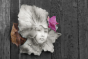 Garden sculpture and autumn leaves, November, private residence, Tacoma, Washington, USA