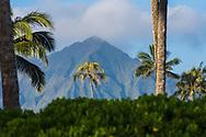 Coconut trees frame Mt. Konahuanui, Kailua Bay, Oahu, Hawaii