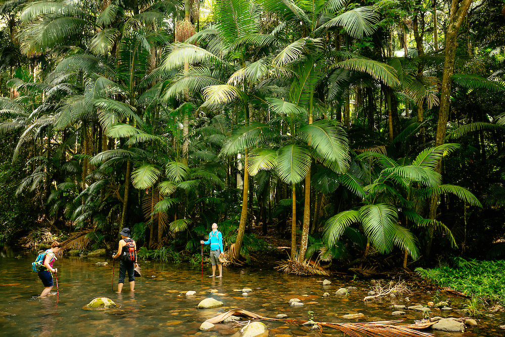 Hikers cross the cool waters of the Coomera River along the Illinbah Circuit in Lamington National Park.