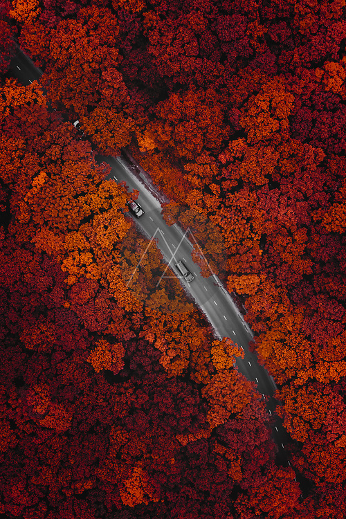 Aerial view of a few vehicles driving on the road through the forest in Vladivostok, Russia.