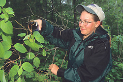 Jodi Yeager Pouring Molasses On Leaves