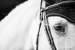 Eye<br /> Laiterie de Montaigu Trophy<br /> Longines Masters Paris 2016<br /> © Hippo Foto - Cara Grimshaw