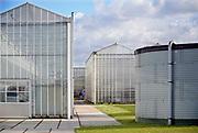 Nederland, Bleiswijk, 12-2-2020  In de kassen van de WUR, wageningen universiteit, was een informatieve bijeenkomst met rondleiding voor de glastuinbouw. De nadruk op het LichtEvent 2020 lag op de toepassing van moderne glassoorten en LED belichting . In de kassen doet de voormalige landbouw universiteit onderzoek om een optimale teelt van bloemen, planten , groente en fruit te bereiken .Foto: Flip Franssen