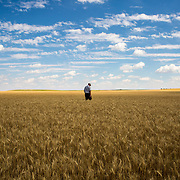Eric Wolgemuth, a thirty-year harvesting veteran and land owner, walks through one of his wheat fields in Kimball, Nebraska, July 2017.<br /> <br /> <br /> One hundred years ago, 99 percent of us were farmers growing our own food, while 1 percent lived in the cities. Now those percentages have reversed—and yet we all have to eat. Where does our food come from? Despite shrinking farmland and the rise of big ag, every spring and summer the wheat belt in America's heartland swells with amber waves of grain.<br /> <br /> Many American farmers still turn to custom harvesters to cut their wheat. Each May, a dwindling number of these harvesters set out in convoys of equipment. Last season I followed one such crew, manned by Eric Wolgemuth, 57, and his exceptionally hardworking men and one woman, ages 20-25, from Lancaster County, PA. They are college students, farmers, and self-taught mechanical whizzes.