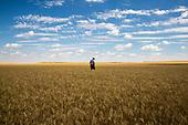 Itinerant Harvesters, USA–in progress