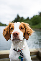 Portrait of puppy on Nehalem Bay, Oregon.