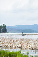 Fly fishing on Davis Lake in central Oregon.