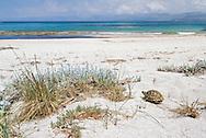 Hermann's Tortoise - Testudo hermanni is the commonest tortoise in much of the Mediterranean region.