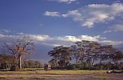 African wildlife, Kenya, Amboseli National Game Reserve, elephant, Mt. Kiliamanjaro