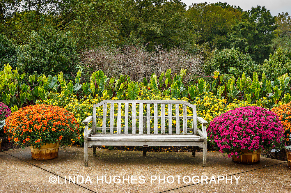 Garden Display with Bench