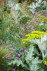 Honesty, cerinthe,  Onopordum acanthium and Euphorbia oblongata in the cutting garden