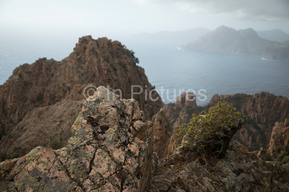 Mountain landscape of the Calanques de Piana, gold and pink coloured granite rock formations formed by wind and rain erosion creating dramatic cavities as they descend into the sea at the gulf of Porto, Corsica, France. Corsica is an island in the Mediterranean and one of the 18 regions of France. It is located southeast of the French mainland and west of the Italian Peninsula.