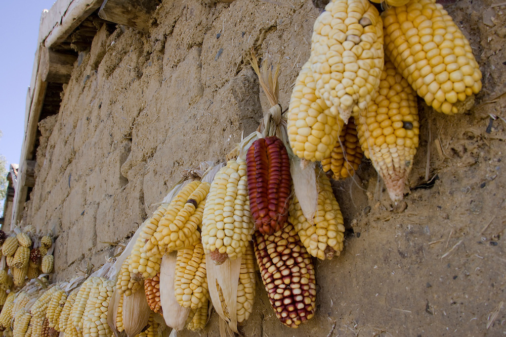 Multi-colored corn husks hanging on mud brick wall of house to dry, Vicos, Peru, South America