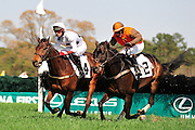 27 March 2010 : William Dowling and AMBERSHAM (right) battle with Brian Crowley and ARCADIUS over the las hurdle in the Woodward Kirkover hurdle race at the Carolina Cup. AMBERSHAM would go on to win the race.