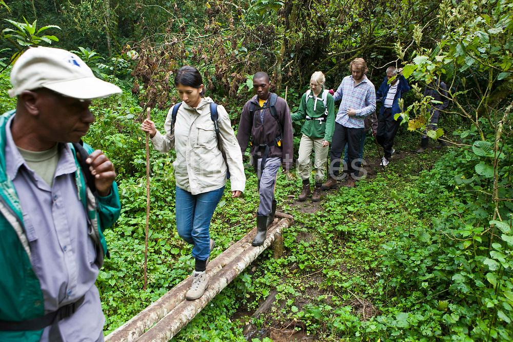 A group of international travellers trekking the Bitukura group of Mountain Gorilla in Bwindi Impenetrable Forest, South Western Uganda.