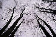 The last leaves of fall cling to the branches of these trees, which will soon become winter's bones.