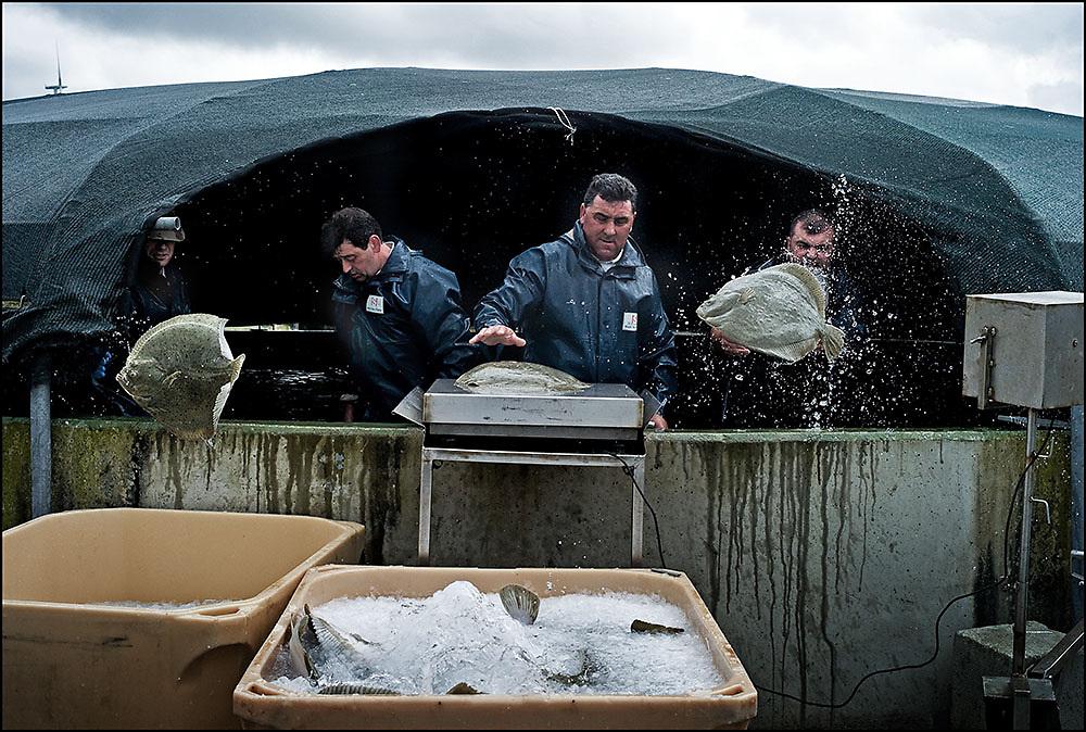 Galicia Fish Industry