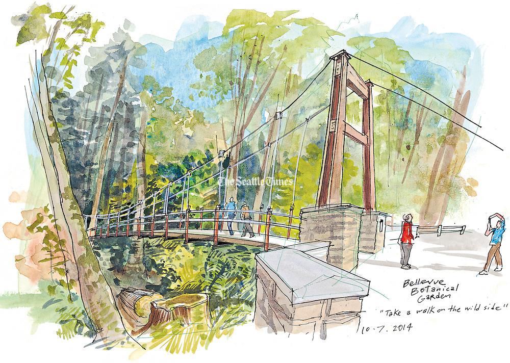 Ravine Experience at the Bellevue Botanical Garden.<br /> Gabriel Campanario / The Seattle Times