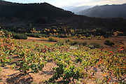 Late afternoon sun over the vineyards near San Pedro de Bedoya, near Potes in the south-eastern side of Picos de Europa. The grapes are used to make Ojeda, a local firewater
