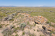 Sagebrush steppe ecosystem in the Bighorn Basin of Wyoming during apring