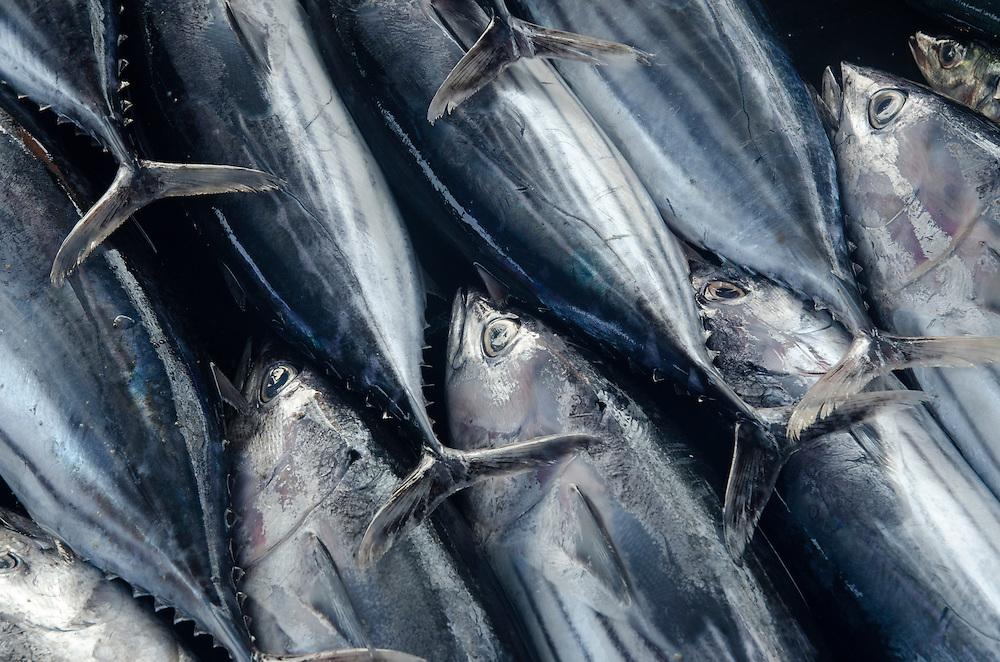 Tuna fish on display, Galle fish market, Sri Lanka