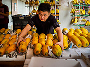 11 DECEMBER 2018 - SINGAPORE:  A vender sets out his papaya in the Haig Road Market and Food Centre in the Geylang neighborhood. The Geylang area of Singapore, between the Central Business District and Changi Airport, was originally coconut plantations and Malay villages. During Singapore's boom the coconut plantations and other farms were pushed out and now the area is a working class community of Malay, Indian and Chinese people. In the 2000s, developers started gentrifying Geylang and new housing estate developments were built.     PHOTO BY JACK KURTZ