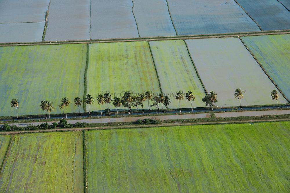 Rice production<br /> Coastal area<br /> GUYANA<br /> South America