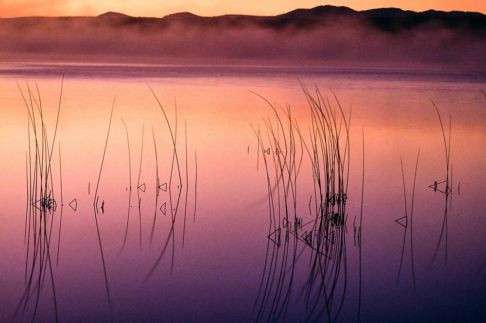 Shoshone Lake, morning light, Yellowstone National Park, Wyoming, USA