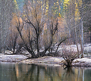 Trees in early spring along the Merced River, Yosemite Valley, Yosemite National Park, California