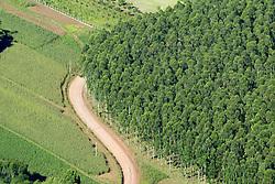 Vista aérea de uma estrada na serra gaúcha. FOTO: Jefferson Bernardes/Preview.com