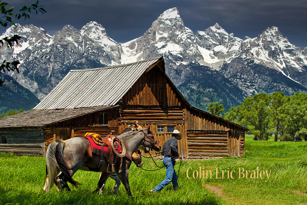 Wall Art Photography of the American West For Sale- A cowboy and his horses travel past an old rustic barn along Mormon Row as the eastern slope of the Grand Teton range is seen at Teton National Park in Wyoming. Colin E. Braley