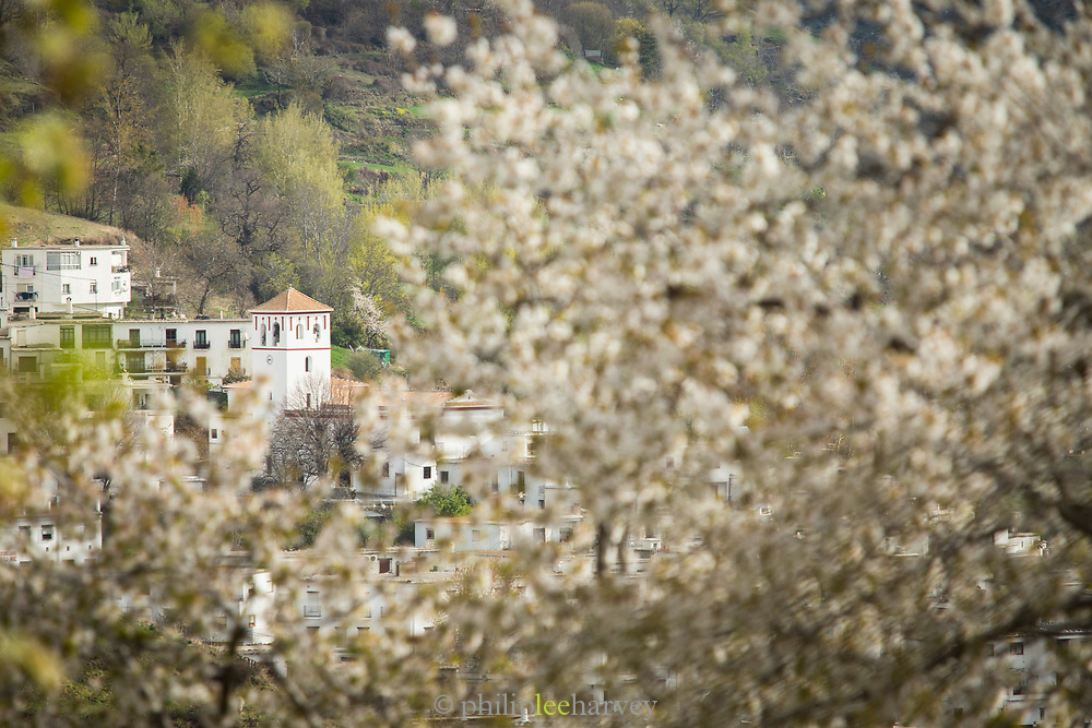 View of town seen through branches and blossom, Trevelez, Andalusia, Spain