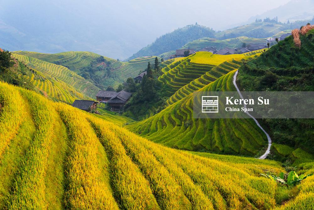 Rice terraces in the mountain, Longsheng, Guangxi Province, China