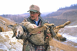 John Carrying Anesthetized Coyote
