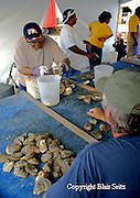Clam Shucking Competition, Bi-Valve Festival, BiValve, New Jersey